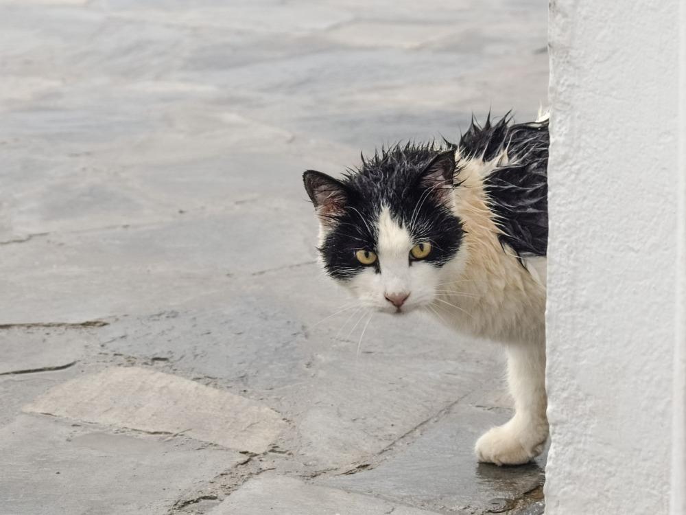 cat-2920718_1280